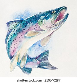 Rainbow trout on white background. Watercolor illustration.