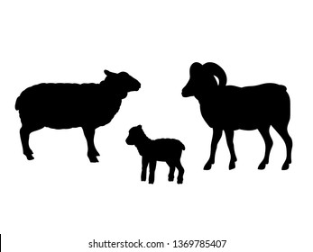 Ram sheep lamb farm mammal black silhouette animal. JPG illustration.