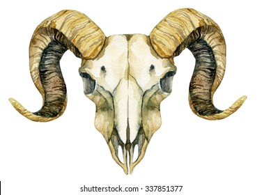 Ram skull. Sheep skull isolated on white background. Hand painted illustration