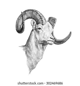 A ram that is hand drawn and isolated on a white background with a side view of a tough bighorn sheep head with large curving horns sketched in a detailed pencil illustration.