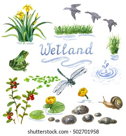 Raster colorful watercolor set of some wetland inhabitants isolated on white. Illustration for botanical and biological sources, book and magazine image, decoration for places nearby water.
