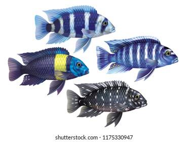 Raster version / Aquarium fish cichlids black