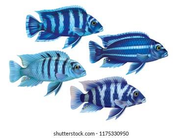 Raster version / Aquarium fish cichlids blue