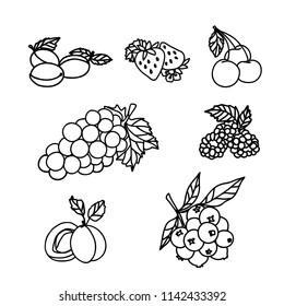 Raster version. Fruit and Berry Sketch on White Background. Strawberry, Raspberry, Grape, Cherry, Currant, Plum, Apricot Fruits with Leaves for Food and Agriculture Design