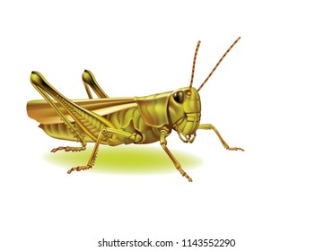 Raster version / Grasshopper on a white background  [Tettigoniidae]