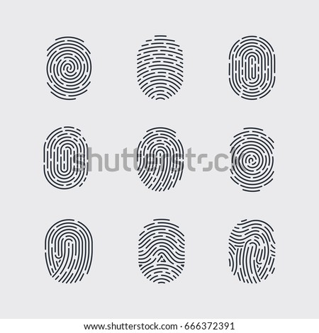 Raster Version Types Fingerprint Patterns Identity Stock Beauteous Fingerprint Patterns