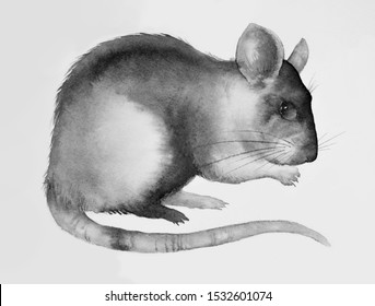 Rat mouse illustration of watercolor painted. Rat black white gray ink, isolated on plain background. Chinese and Japanese painting, symbol of 2020. Rodent beautiful picture rat cute mouse.