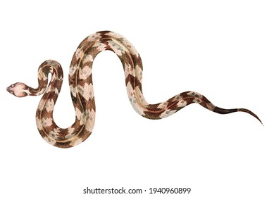 Rattlesnake with watercolor isolated on white background.Snake illustration painted with watercolors.Poisonous and dangerous reptiles.Clipping path.