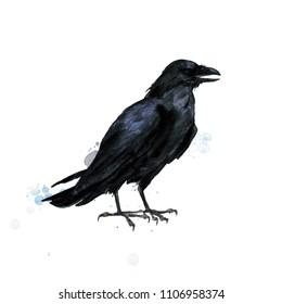 Raven. Watercolor Illustration.