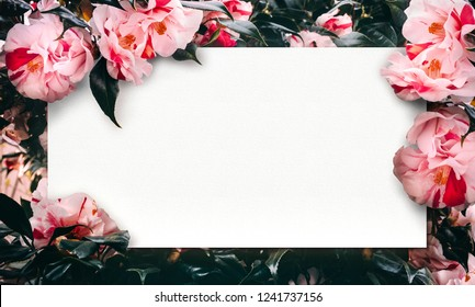 Real Flowers bloom background with Precious paper space for your wording . Collection of brilliant flora background template for attach charm style to all of your artwork ideas on several occasion