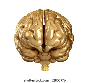 Real human brain isolated - front view