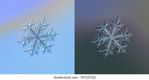 Real snowflake macro photo: large stellar dendrite snow crystal with fine hexagonal symmetry, complex elegant shape and long, ornate arms. Snowflake glittering on smooth gradient background.