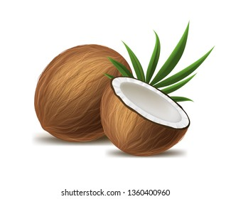 Realistic 3d Detailed Brown Exotic Whole Coconut, Half and Green Leaf. illustration of Fresh Tropical Fruit