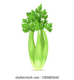 Realistic 3d Detailed Green Fresh Celery Ingredient of Health Salad and Juice. illustration of Raw Stalk