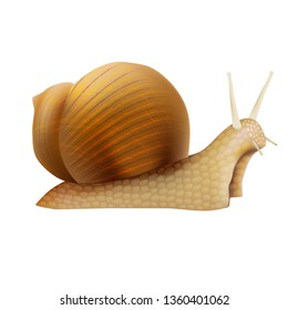 Realistic 3d Detailed Slimy Snail with Shell Closeup View Symbol of Female Moisturizing Cream and Cosmetic. illustration