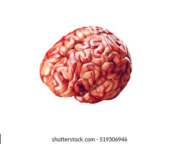 Realistic 3d Illustration of human brain with blood vessels isolated on white