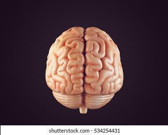 Realistic 3d Illustration of human brain front view isolated on black
