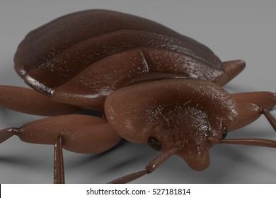 realistic 3d render of bedbug