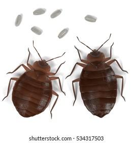 realistic 3d render of bedbug set
