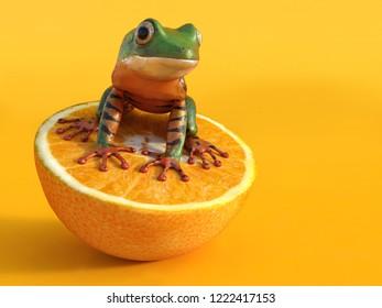 Realistic 3D rendering of a green and orange colored tigerleg monkey tree frog, Phyllomedusa tomopterna, sitting on an orange fruit. Orange background.