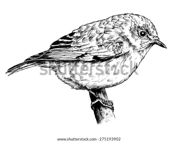 Realistic Bird Sketch Hand Drawn Pen Stock Illustration