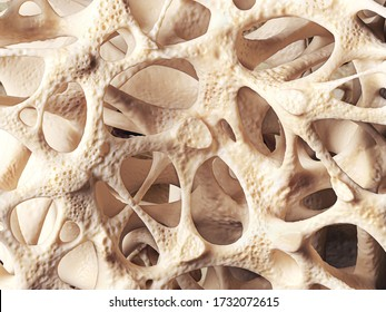 Realistic bone spongy structure close-up, bone texture affected by osteoporosis, 3d illustration