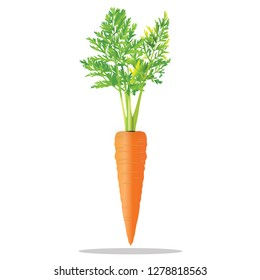 Realistic carrot icon
