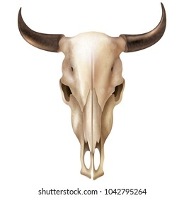 Realistic cow skull with stains and black shiny horns on white background isolated  illustration