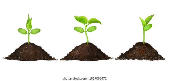 Realistic drawing of a green sprout growing in the soil. microgreen sprouts A young seedling in the soil on a white background. The process of development and growth, organic agriculture, eco-products