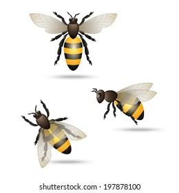 Realistic flying honey bees set isolated on white background  illustration