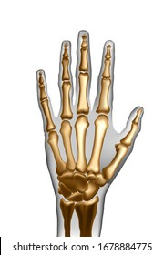 realistic frontal top image of skeleton of human hand with bones isolated. Anatomy of joints for learning or advertising or medical publications. Illustration stock .