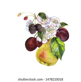 Realistic fruits on a white background in vintage style. Pear, plum, blackberry, raspberry, cherry flowers