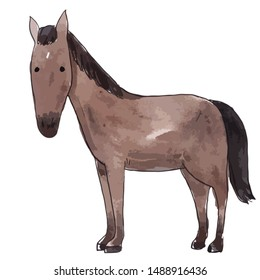 Realistic horse on a white background. Watercolor illustration or sketch or print