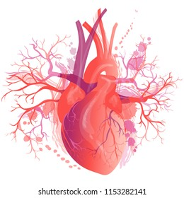 realistic Human heart, internal organ. Anatomy concept
