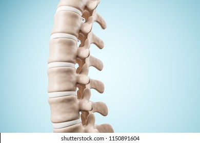Realistic human spine illustration. Side view on the blue background. 3d render.