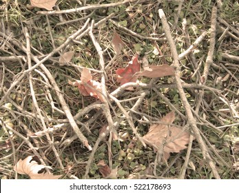 Realistic hunting and military camouflage print. Branches, grass and leaves. Seamless pattern.
