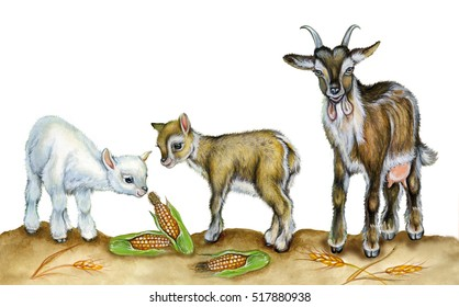 realistic illustration of a goat with two kids. Watercolor hand drawn illustration on white background.
