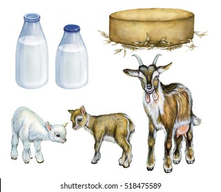 realistic illustration of a goat with two kids, bottles of milk and cheese. Watercolor hand drawn illustration on white background.