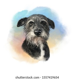 Realistic Illustration of a miniature schnauzer dog. Portrait of a Cute puppy on watercolor background. Hand painted illustration. Animal art collection: Dogs. Good for print T-shirt, card, pillow.