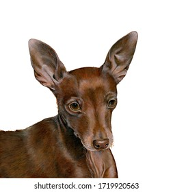 realistic illustration not digital of a pinscher dog. Hand made: tempera on board