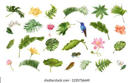 Realistic illustration set of tropical leaves and flowers isolated on white background. Highly detailed colorful plant collection. Botanical elements for cosmetics, spa, beauty care products