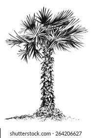Realistic isolated palm