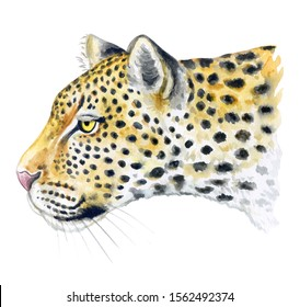 Realistic leopard muzzle in profile isolated on white background. Watercolor. Illustration. Template. Hand drawing. Close-up. Clip art. Hand painted.