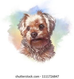 Realistic Portrait of Yorkshire Terrier. Illustyration of Toy Poodle Dog. Cute puppy. Watercolor hand drawn illustration. Animal collection: Dogs. Good for print T-shirt, pillow, cover. Art background