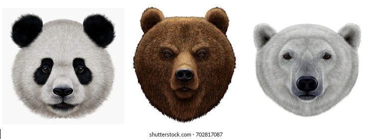 Realistic portraits of the Panda of the White Polar and Brown Grizzly bear heads. Set with animals