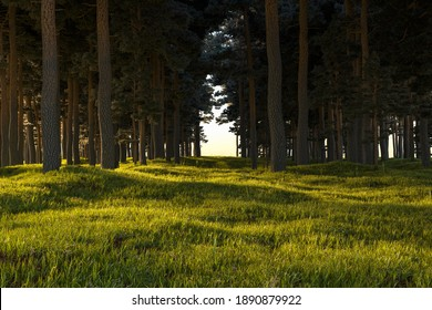 Realistic pristine landscape with fir forest and bright juicy grass. Heaven view. 3d rendering high quality