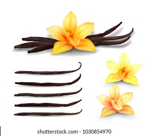 Realistic  set of isolated elements. Vanilla flowers and pods or sticks