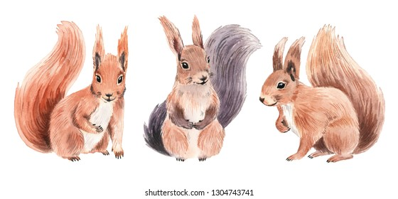 Realistic squirrels in watercolor style. Isolated on white background.