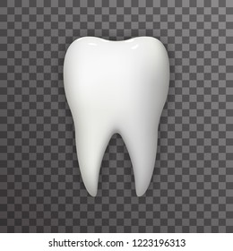 Realistic Tooth Poster Transperent Stomatology Icon Template Background Mock Up Design  Illustration