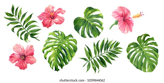 Realistic tropical botanical foliage plants. Set of tropical leaves and flowers: green palm neanta, monstera, hibiscus. Hand painted watercolor illustration isolated on white.